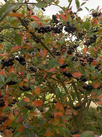 Efterårstræ