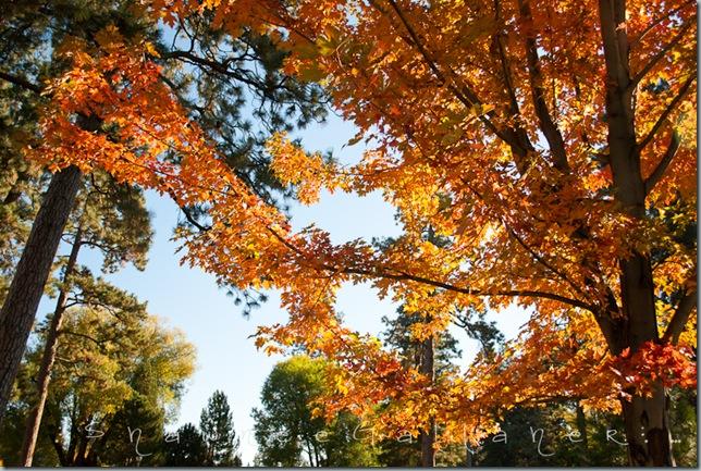 Drake Park.tree3