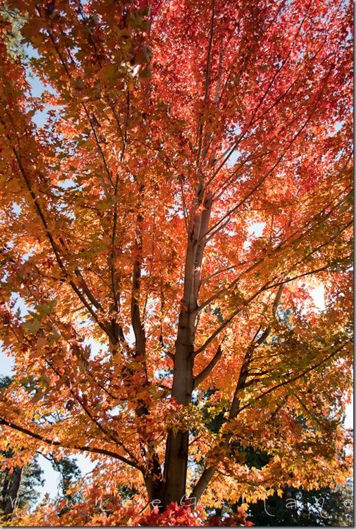 Drake Park.tree2