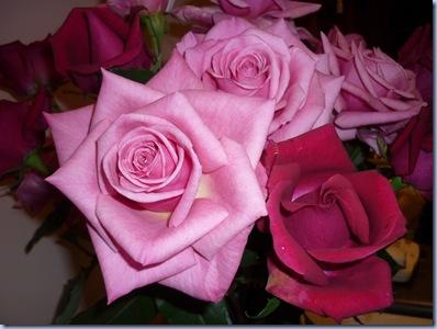 rosescloseup