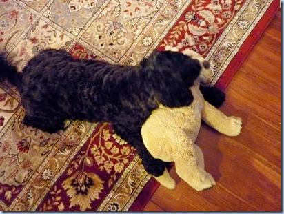 molly & puppy