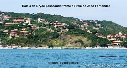 Foto 10 Baleia de Bryde en João Fernandes