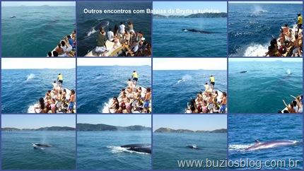 Foto 6 Outros encontros entre Baleias de Bryde e turistas.