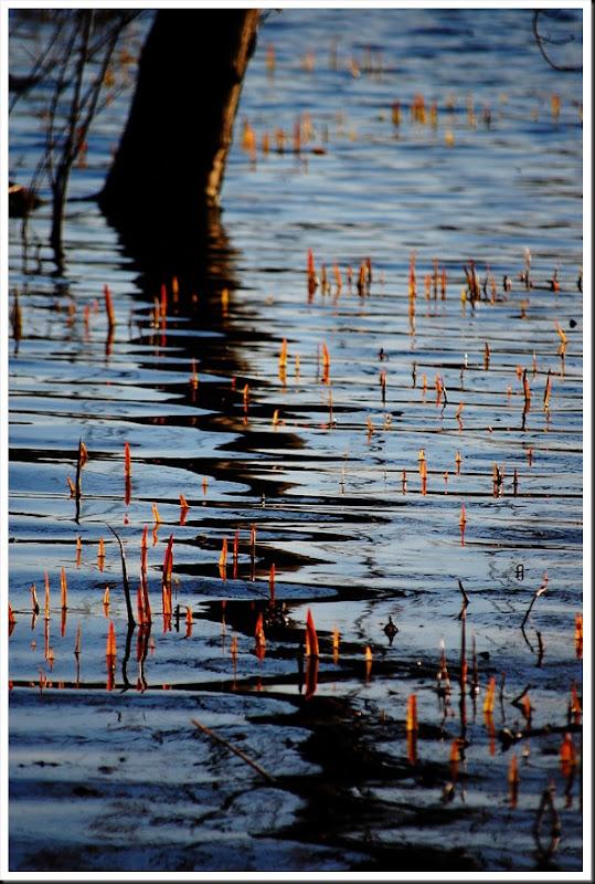reed tree
