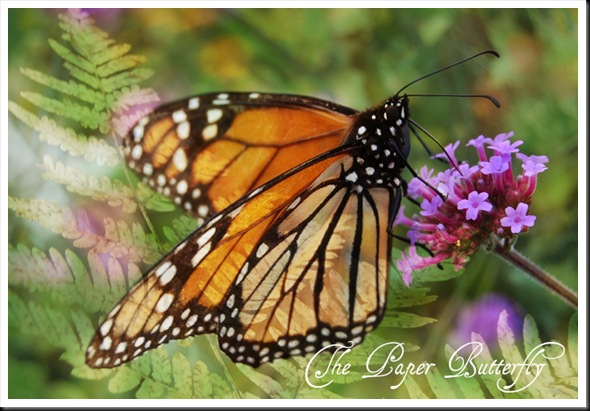 BUTTERFLIES-MONARCH FERN copy