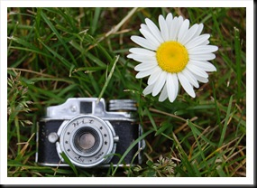 Camera and Daisy