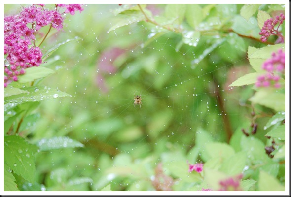 spiderweb raindrops
