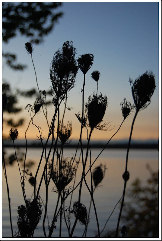 river sunset queen anne's lace