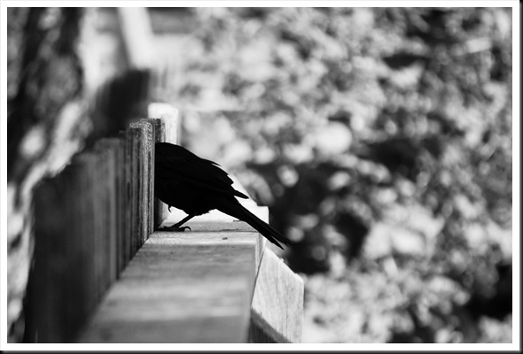 Bird Fence BW
