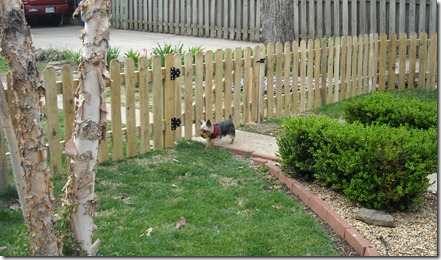 new fence 4-5-10 1
