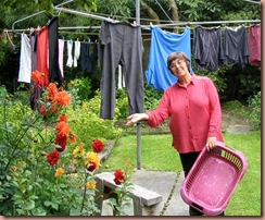 dahlias-washing-line