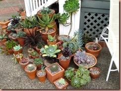 pottedsucculents