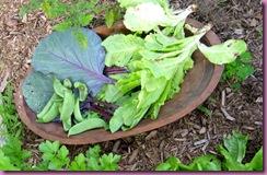picked veg