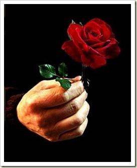 dando uma rosa