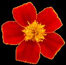 flower014