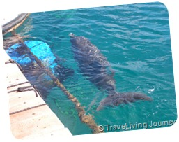 Dolphins at the Reef