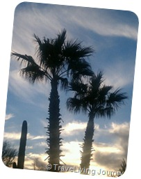 Palm trees just before sunset