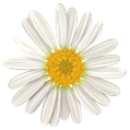 DS_All_youNeedIs_Love_Add-On_Daisy