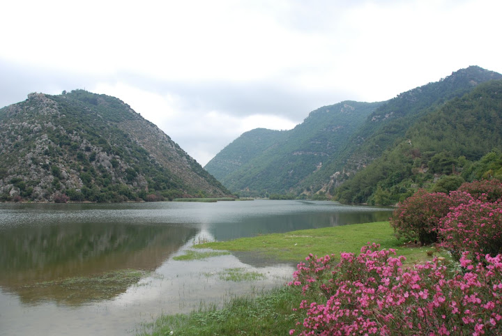 بحيرة السمك صورة مبتدئة