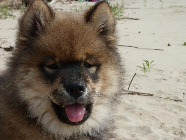 le plus beau chien du monde!!!! P1030371