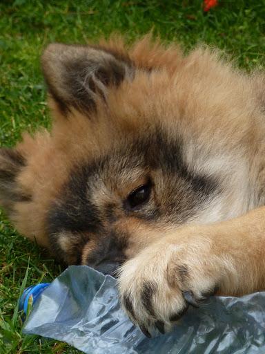 le plus beau chien du monde!!!! P1050560