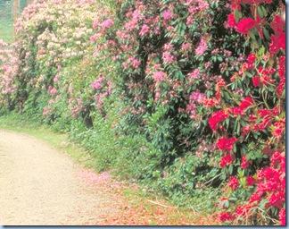 Camino con flores.bmp