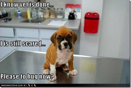 cute-puppy-pictures-scared-hug