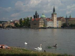 Los cisnes y la foca, Praga
