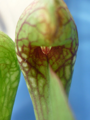 Listas de cultivo lista de zypo for Bricorama vinaros