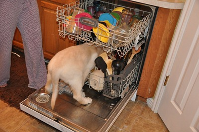 Sebastian_Loves_To_Do_The_Dishes_003[2]