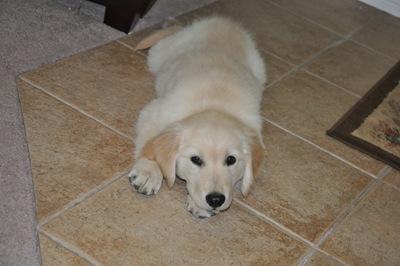 New Puppy 025