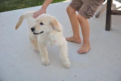 New Puppy 014
