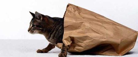 bag_cat
