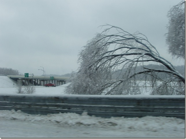 tree by route 33 entrance