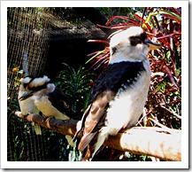019 Kingfishers