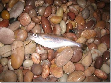 Lyme Regis/Budleigh Salterton – Sea Fishing