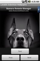 Screenshot of Lovable Doberman Wallpapers
