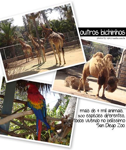 sandiegozoo4 - Passeios - San Diego Zoo