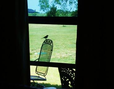 birds nest (3)