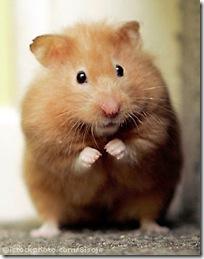 hamster_1301300