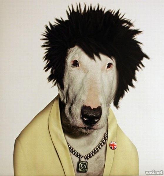 animales rockeros (11)