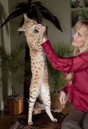 gato migallinero (3)