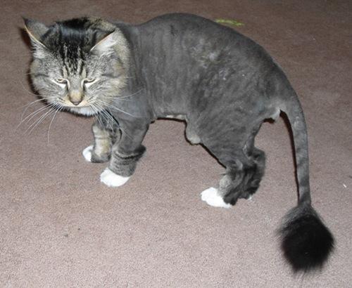 shavedpussy