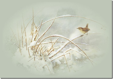paisajes nevadors (23)