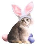 EasterKitten