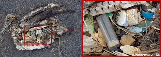 coluna zero, meio ambiente, atol midway, lixo plástico, aves mortas, poluição dos oceanos