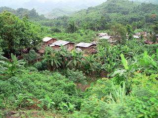 Varias chozas rurales, vistas desde lejos, en medio de un bosque tropical