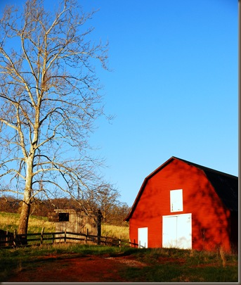 Barn and the coop