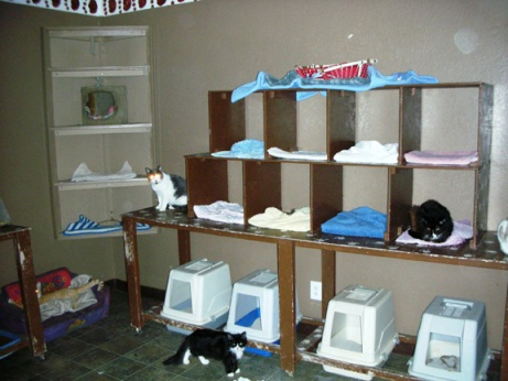 condo room no cage adoption center cat house pic