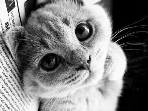 cute kitten eyes looking staring cat pic